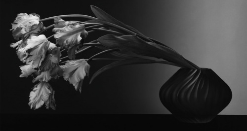 mapplethorpe_crop_01
