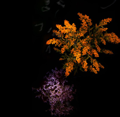flower-firework-sarah-illenberger-sabrina-rynas-designboom-10