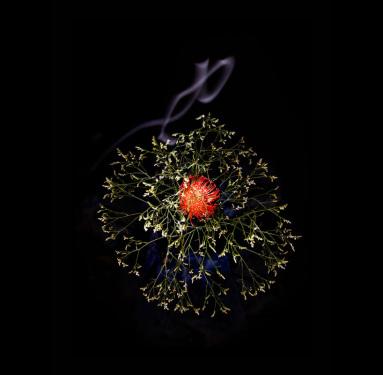 flower-firework-sarah-illenberger-sabrina-rynas-designboom-12