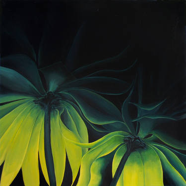 yellow flowers Barry Grose