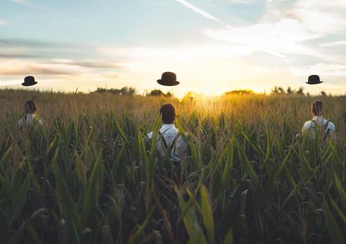 logan zillmer cornfield sunset