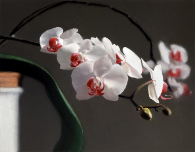 gr orchidee