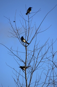 birdrow