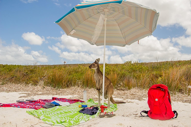 kangaroo-picknick