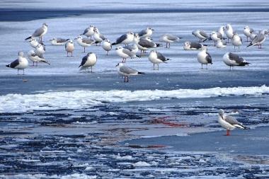 1-flock-of-gulls