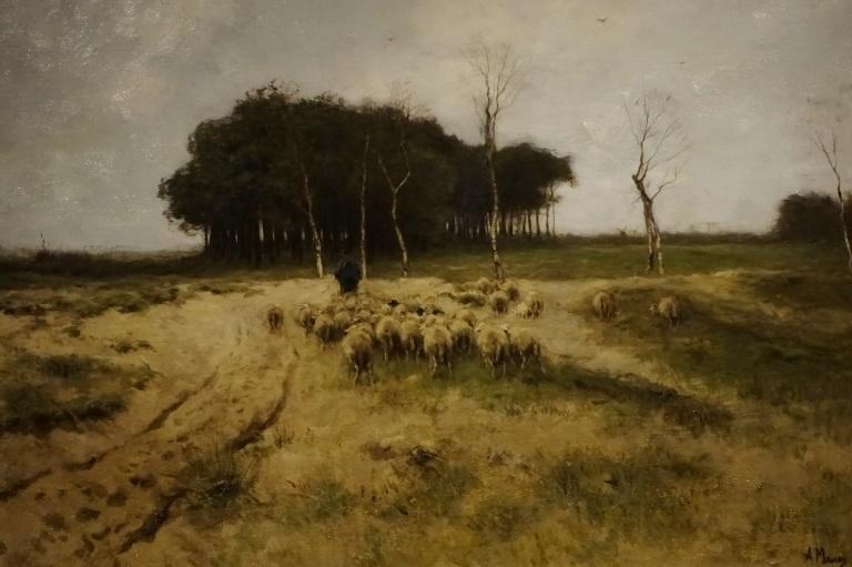 5-shepherd