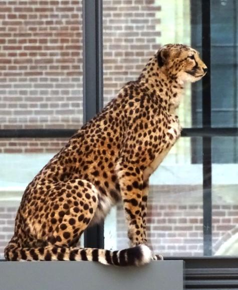 a-gepard1