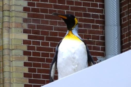 a-penguin