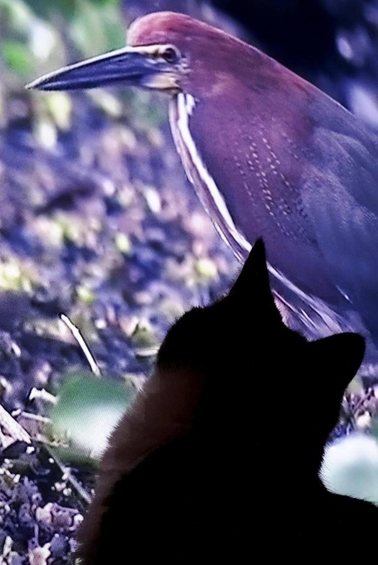 big-bird-2
