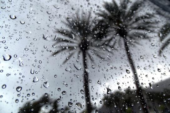rainy palms