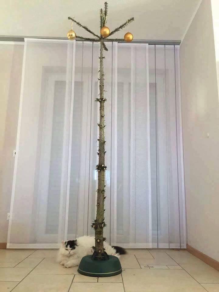 katzen-weihnachtsbaum