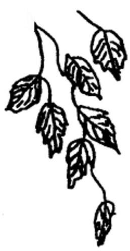 Zweig-Blaetter